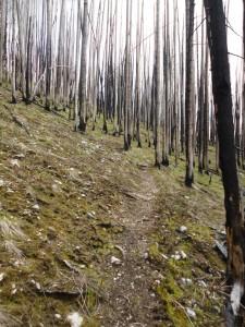 Trail through the burn