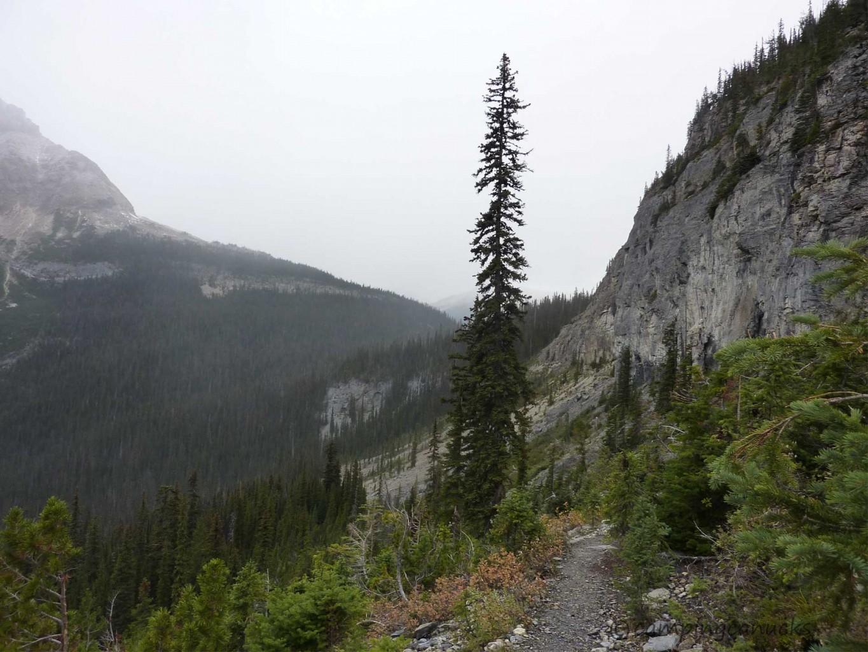 Trail to Burgess Shale