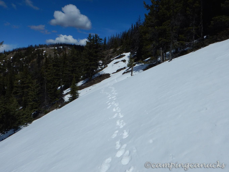 One of the snow packs we crossed